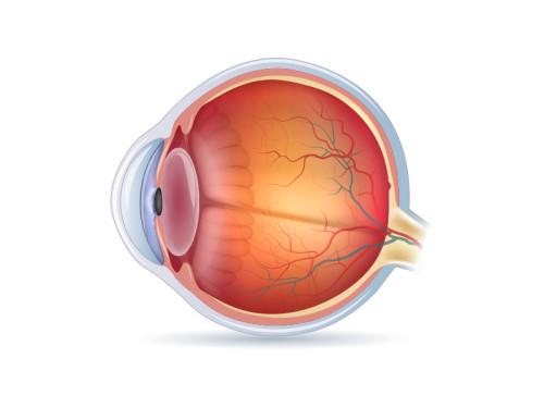 Occhio con cristallino sano