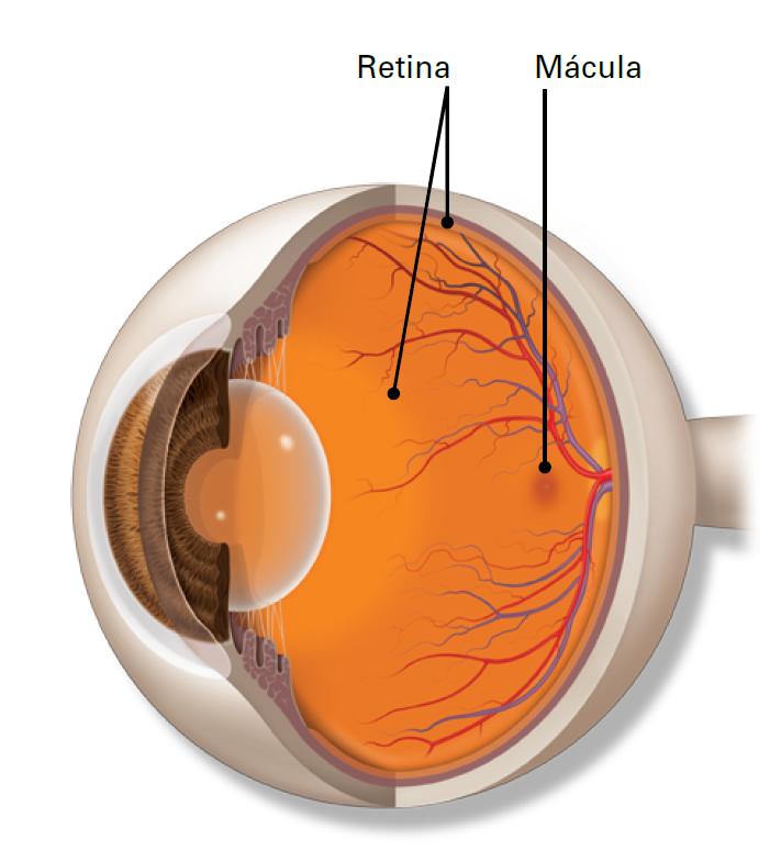 Ipovisione riduzione della visione :  possibilità di miglioramento con la riabilitazione